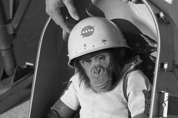 Ham_the_chimp__cropped_