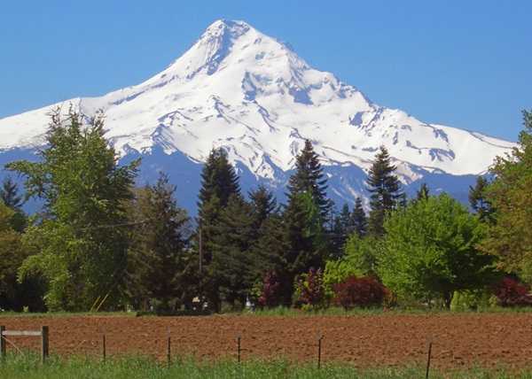D4ColletteMountHood_CVO_11503