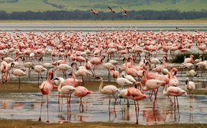 flamingos_0230001_website__mammana_