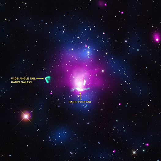 "A ""radio phoenix"" has been discovered using X-ray, radio, and optical data."