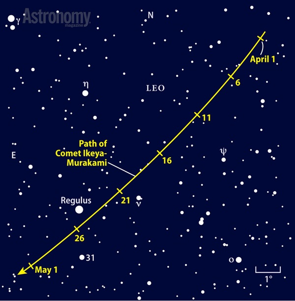 Use 1st-magnitude Regulus as a guide to find Comet Ikeya-Murakami
