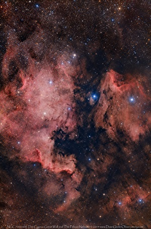 The North America Nebula (NGC 7000) sits next to the Pelican Nebula (IC 5067) in the constellation Cygnus the Swan.