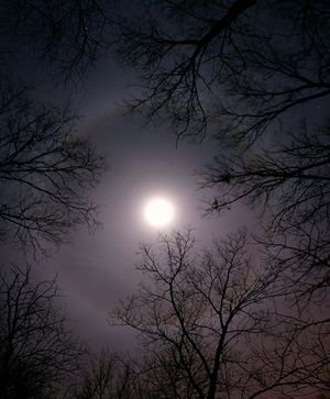 Lunar halo on New Years Eve