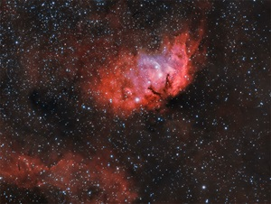 The Tulip Nebula