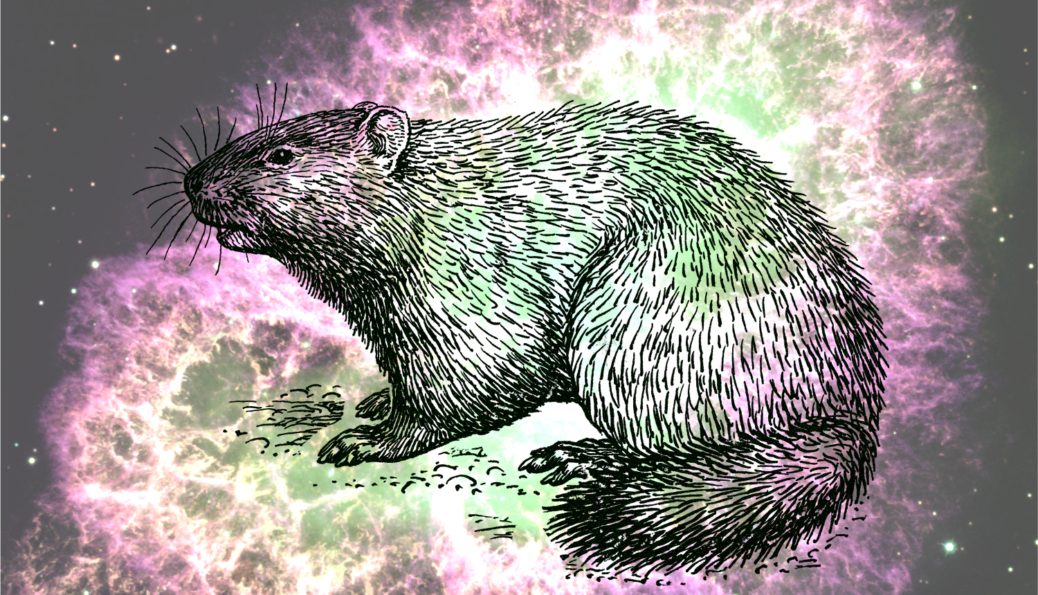 how groundhogs day and astronomy intersect astronomy com